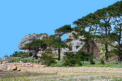 DSC 0045ac Plougrescant Pors Scaff Beach Wind Sculpted Pines