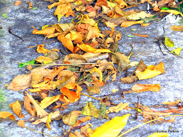 Leaves Are Beautiful Too.