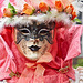 """""""Venetian Fairies"""" - Saverne, Alsace, France - 2017-04-16_803"""