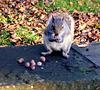 Grey squirrel (3 of 3).