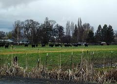 Farm, Horsley Rd.