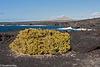 Leben in der Vulkanwüste - Living in the volcanic desert