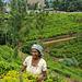 Sri Lanka - le piantagioni del thè - CWP - Contest Without Prize