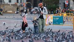 Tauben füttern
