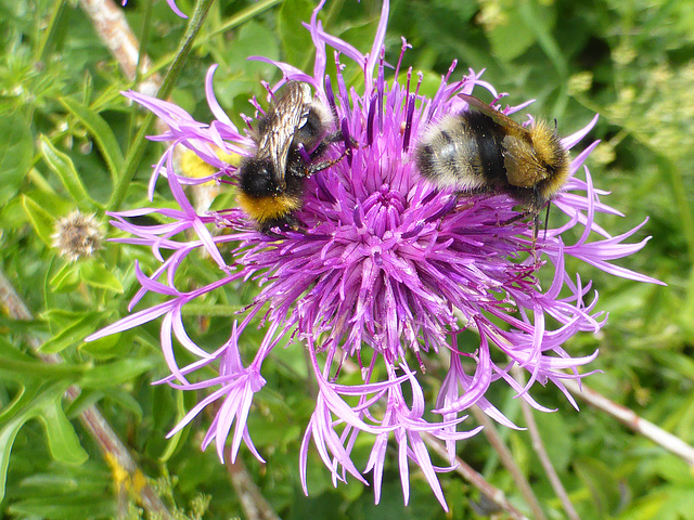 Two bees or not two bees .....