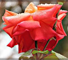 Belle sous la pluie ...