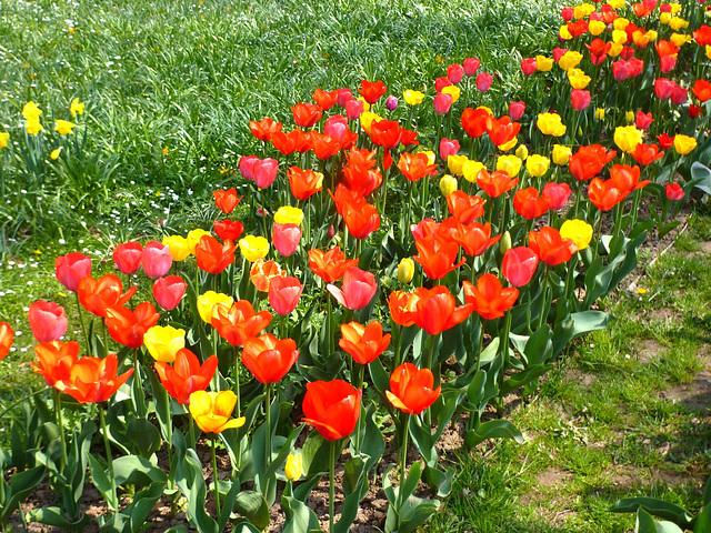 Farb-Sinfonie - grün - gelb - rot / kolora simfonio verda - flava - ruĝa