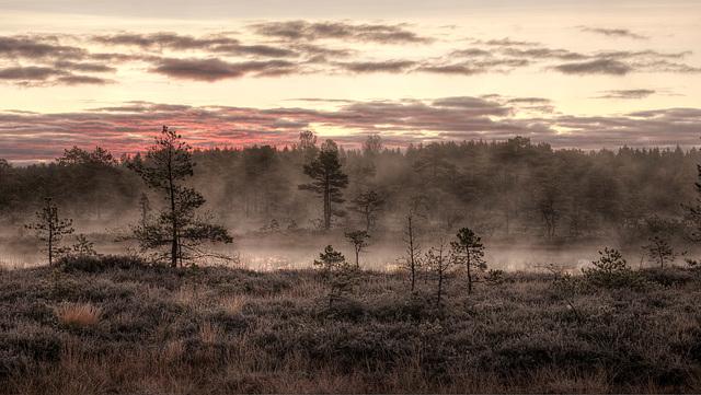 Tourbière dans la brume d'un matin d'octobre