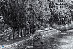 Rive de la Seine