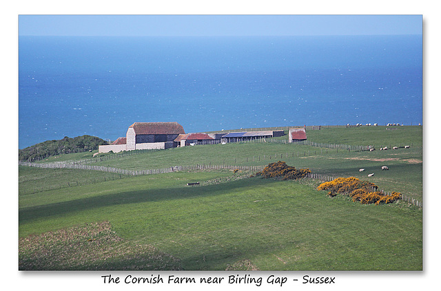Cornish Farm near Birling Gap - Sussex - 30.4.2015
