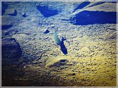 der Grüne Fisch