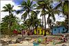 Catalina : qui le noci di cocco sono state rimosse dalle piante per sicurezza