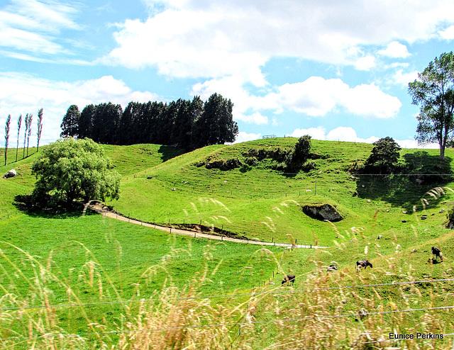 Verdent Pastures.
