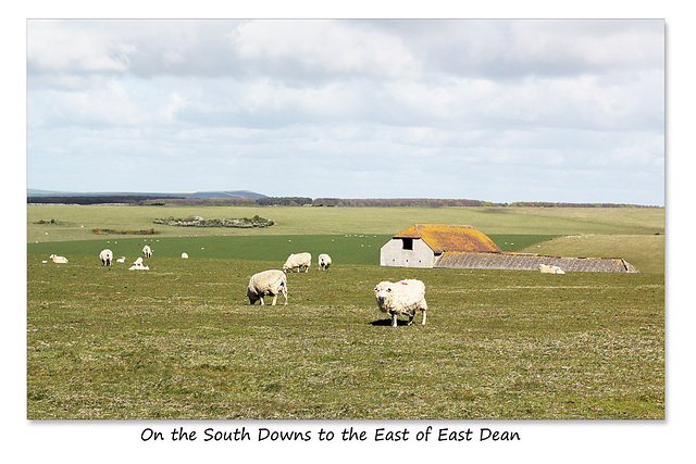 On the South Downs to the East of East Dean - Sussex - 30.4.2015