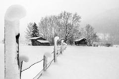 Winter Dreams #2