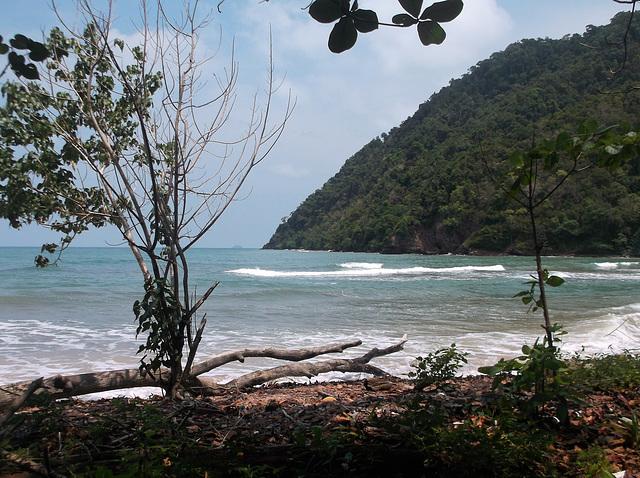 ธรรมชาติไทย / Thaï wilderness / Nature Thaïlandaise