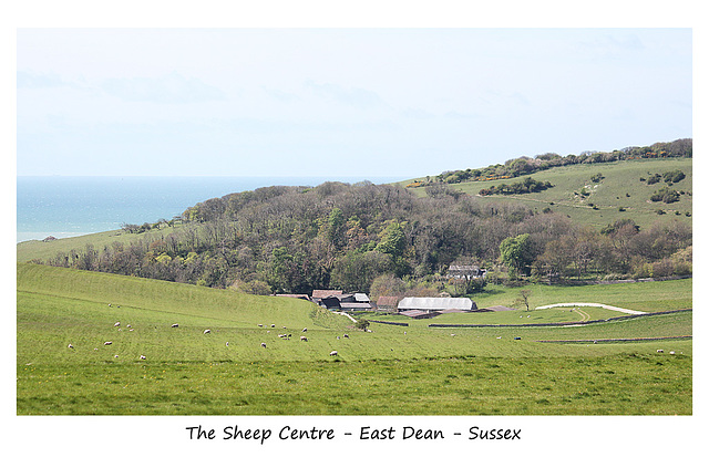 Sheep Centre - East Dean - Sussex - 30.4.2015