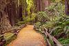 John Muir Woods Path