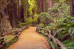 John Muir Woods Path