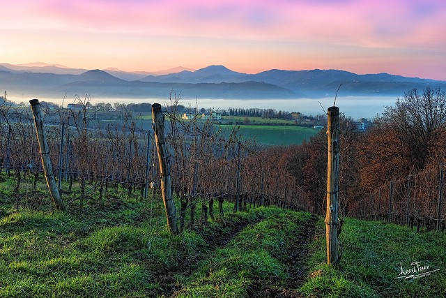 Vigneti in Val Taro - Vineyards in Taro Valley