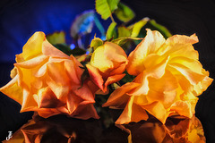 Trio de roses