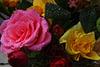 Roses...arrosées