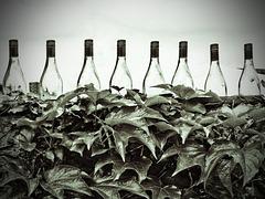 Wine Farmer's Fence