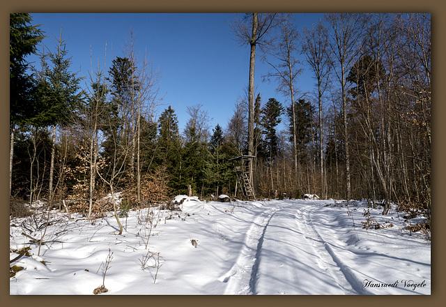 Wald und Wirdschaft Weg