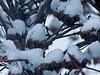 La nouvelle neige….