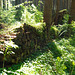 Vergessener Holzstapel