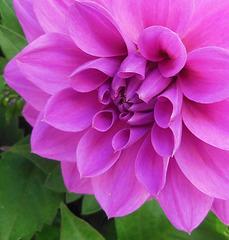 ROSE BONBON / SWEET PINK