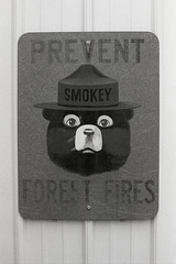 Remember, Only You Can Prevent Forest Fires