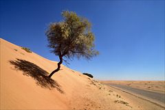 Acacia Nilótica, Sunth Garath