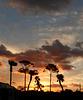 Sunrise at Hobe Sound, Florida
