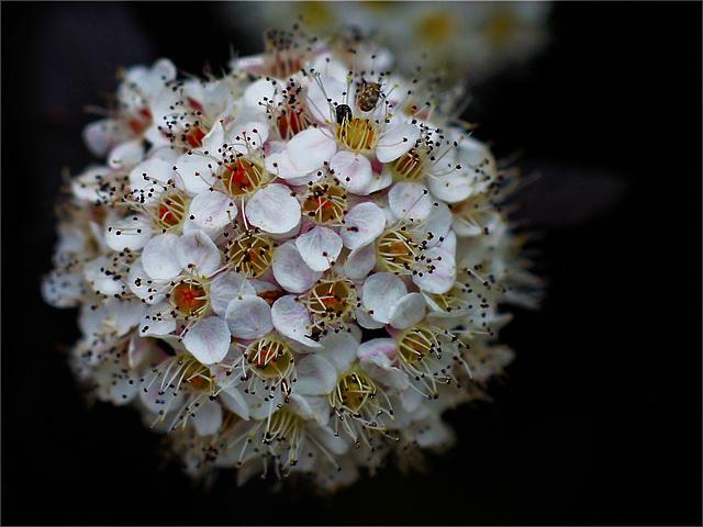Closeup bloom