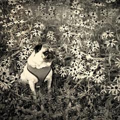 sitting in a field of flowers