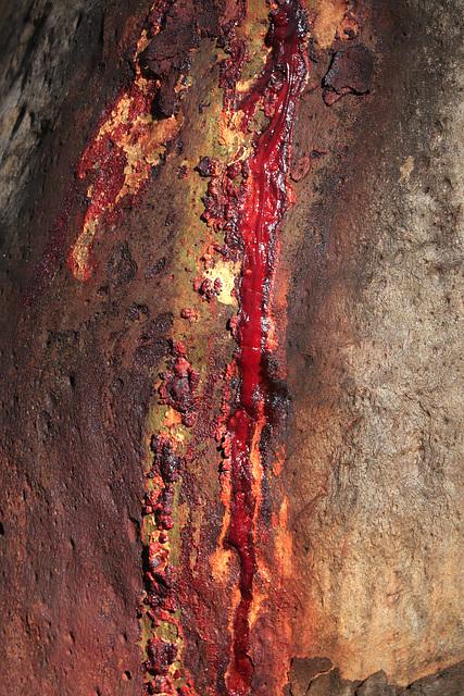 Pink Bloodwood Sap
