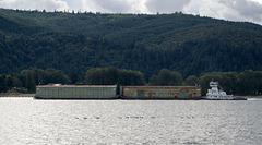 Kalama WA Columbia River ducks (#1487)