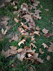 Autumn still was not completely swept by the wind