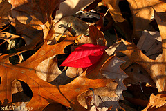 Autumn (2)