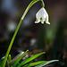 Spring Snowflake (1)