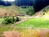 Cows In A Farm Valley.
