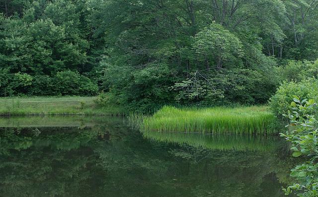 Pond on Blue Ridge Parkway