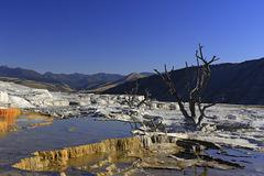 Trail Springs