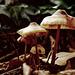 So zierliche Lampenschirmchen - So delicate little lampshades