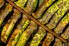 L.L. Stub State Park: Mottled Fern Frond
