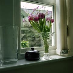 Kitchen - Tulips