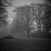 The foggy park