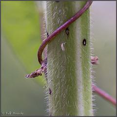 MM - Abstrakter Blütenstengel