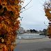l'automne à la ville